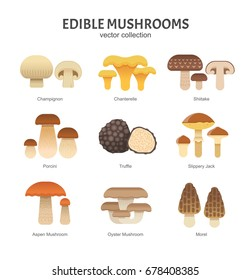 Edible mushrooms set. Vector illustration of different types of mushrooms, such as Champignon, Chanterelle, Shiitake, Porcini, Slippery Jack and Truffle in trendy flat style. Isolated on white.