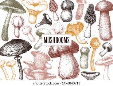 Edible mushrooms vector design. Hand drawn healthy food template. Forest plants sketches. Perfect for recipe, menu, label, packaging. Vintage mushrooms background. Botanical illustration in color.