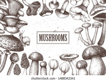 Edible mushrooms vector design. Hand drawn healthy food template. Forest plants frame. Perfect for recipe, menu, label, icon, packaging. Vintage mushrooms background. Botanical sketches.
