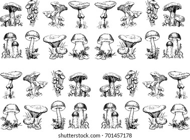 Edible mushrooms.Hand-drawn edible mushroom