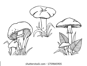 Edible and poisonous mushrooms with grass and leaves, painted by black liner in hands. Idea for learning, coloring, poster and children's art. Trace