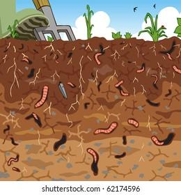 Editable vector illustration of earthworms in garden soil