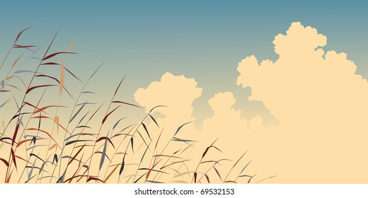 Editable vector illustration of toned reeds against the sky