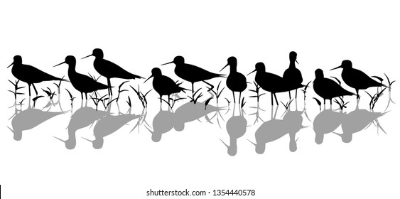 Editable vector silhouette of black-winged stilts in a marsh with all elements as separate objects