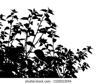 Editable vector silhouette of generic vegetation