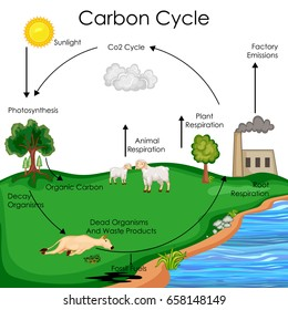 Carbon cycle images stock photos vectors shutterstock education chart of biology for carbon cycle diagram vector illustration ccuart Choice Image