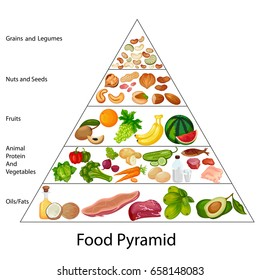 Education Chart of Biology for Food Pyramid Diagram. Vector illustration