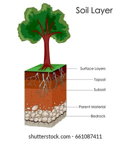 Education Chart of Biology for Layers of Soili Diagram. Vector illustration