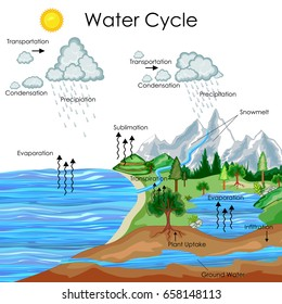 Education Chart of Biology for Water Cycle Diagram. Vector illustration
