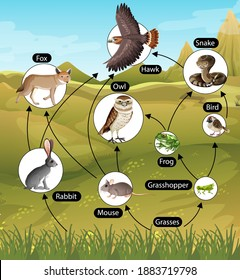 Education poster of biology for food chains diagram illustration