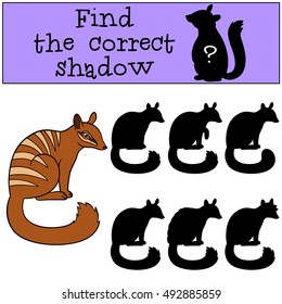 Educational game: Find the correct shadow. Little cute numbat sits and smiles.
