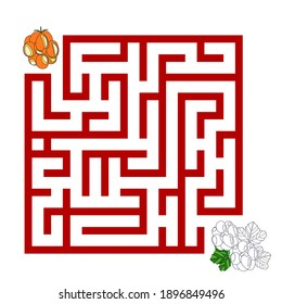 Educational game with a maze and wild berries on a white background. Puzzle for kids