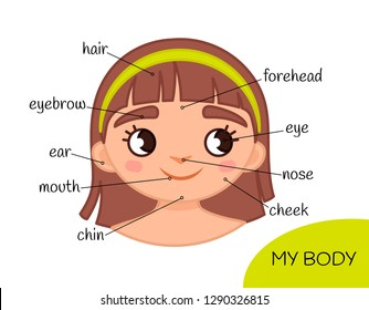 Educational material for children My body. My face.  Illustration of a cartoon girl.