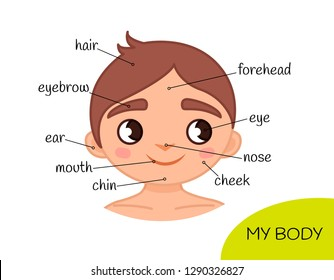 Educational material for children My body. My face.  Illustration of a cartoon boy.