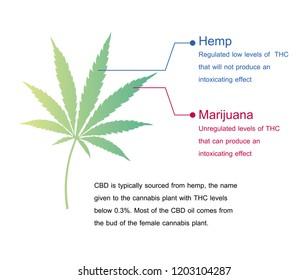 effect of hemp and marijuana