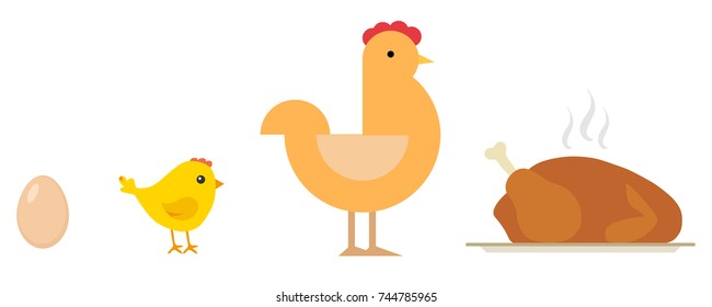 Egg, chick, chicken, baked chicken on tray. Life cycle of the chicken. Flat design, vector illustration, vector.