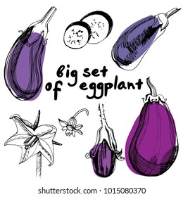 Eggplants set. Hand drawn sketch style eggplants. Fresh and sliced aubergine. Vintage illustration of healthy fresh organic food.