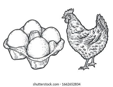 Eggs and hen sketch vector illustration.