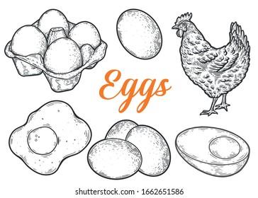 Eggs set sketch vector illustration.