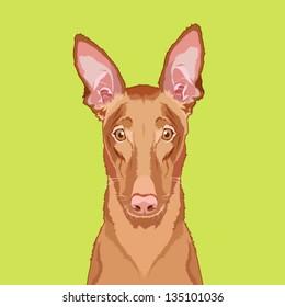 Egyptian pharaoh hound, The buddy dog