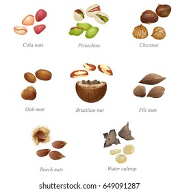Eight named nuts and their peeled kernels. Part two / There are cola nuts, pistachios, chestnut, oak nut, Brazilian nut, pili, beech nuts and water caltrop