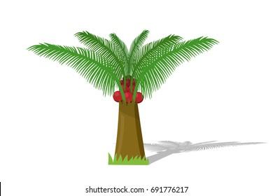 (Elaeis guineensis) Oil plam tree on white, vector