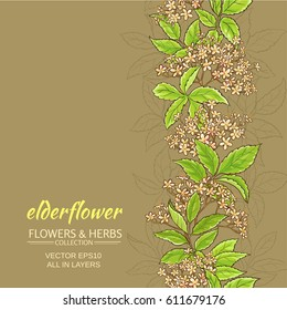 elder flower branches vector pattern on color background