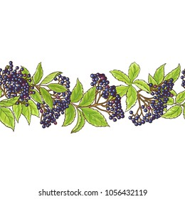 elderberry branch vector pattern