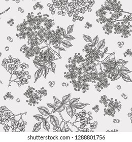 Elderberry and elderflower seamless pattern. Hand drawn sambucus flowers, leaves and berries. Vector illustration vintage.