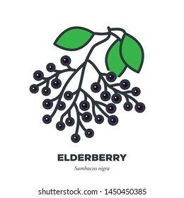 Elderberry fruit icon, outline with color fill style vector illustration, fruit cluster and leaves