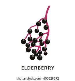 elderberry icon, isolated on white background, vector illustration