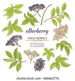 elderberry vector set