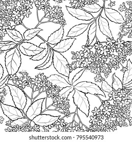 elderflower seamless pattern