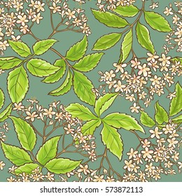 elderflower vector pattern
