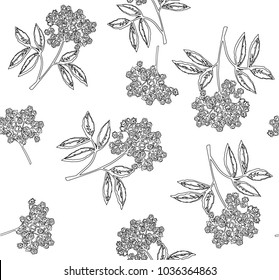 Elderflower vector seamless pattern