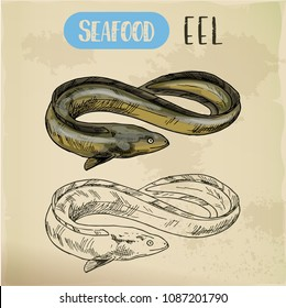 Electric, mud or snake eel or spiny conger fish. Sketch of seafood for unadon dish or restaurant menu, shop or store sign. Hand drawn underwater animal. River fauna and wildlife, marine and aquatic