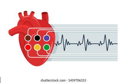 Electrocardiography (ECG) icon - human heart with sensors and paper report or heart rate - isolated vector medical illustration