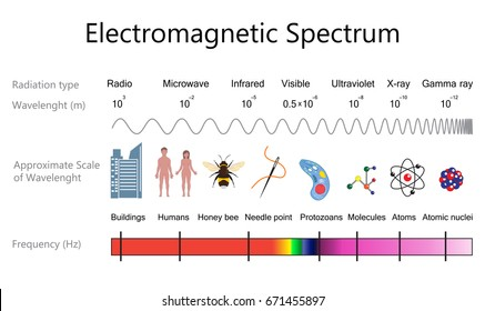 Electromagnetic spectrum and wavelengths diagram. Vector illustration flat design