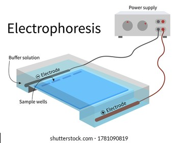 Electrophoresis chamber with power supply electrode submerged in the buffer solution and sample gel in placed