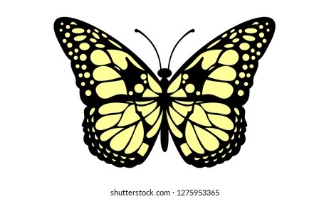 elegant and beautiful butterfly