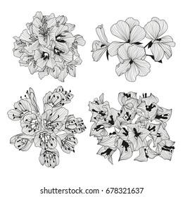 Elegant decorative bougainvillea flowers, design element. Floral branch. Floral decoration for vintage wedding invitations, greeting cards, banners.