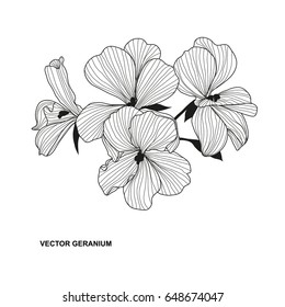 Elegant decorative geranium flower, design element. Floral branch. Floral decoration for vintage wedding invitations, greeting cards, banners