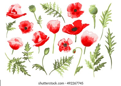 Elegant decorative vector poppy flowers and leaves in watercolor style, design element. Floral decoration for wedding invitations, greeting cards, banners. All elements are editable