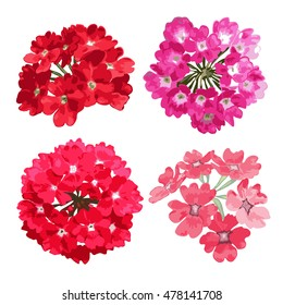 Elegant decorative vector verbena flowers in watercolor style, design elements. Floral decoration for wedding invitations, greeting cards, banners. All elements are editable