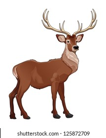 Elegant deer. Vector isolated animal.