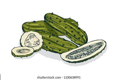 Elegant detailed drawing of whole and cut pickles or pickled cucumbers. Marinated vegetable, vegetarian snack or vegan appetizer isolated on white background. Hand drawn realistic vector illustration