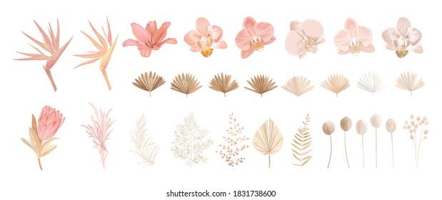 Elegant dry protea flower, tropic palm, pale orchid, eucalyptus, dried tropical leaves, floral elements. Trendy winter, autumn wedding bouquets, vintage decoration. Vector isolated illustration set