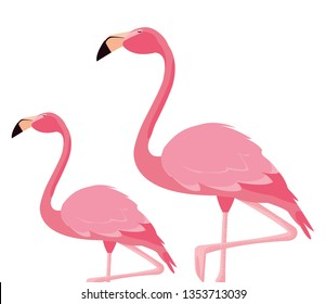 elegant flamingo birds couple