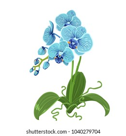 Elegant gentle blue orchid phalaenopsis exotic tropical flower inflorescence isolated on white background. Buds, stem, roots green leaves. Detailed realistic vector design illustration. Sign symbol.