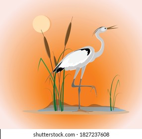 An elegant heron bird stands on one foot on the coast of the lake surrounded by cattail bush against an orange sunrise or sunset background. Vector drawing for design.